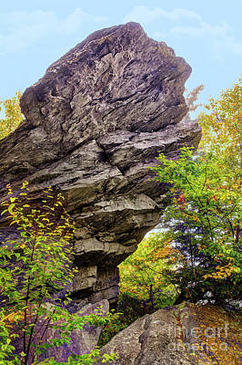 Photograph - Autumn Fall Colors - Hiding Under A Rock by Dan Carmichael