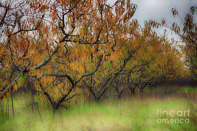 Photograph - Autumn Fall Colors In A Peach Orchard by Dan Carmichael