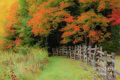 Photograph - Autumn Fall Colors - Into The Cave by Dan Carmichael