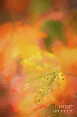 Digital Art - Autumn Fall Colors - Leaf Ap by Dan Carmichael
