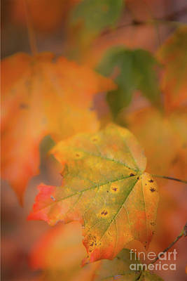 Photograph - Autumn Fall Colors - Leaf by Dan Carmichael