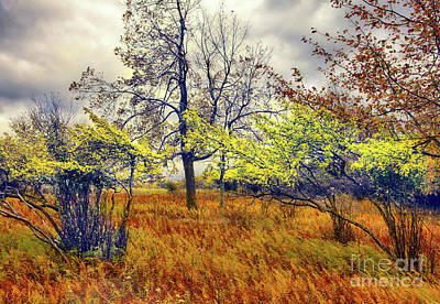 Autumn Fall Colors - Shrubs, Ferns, And Stormy Skies Art Print