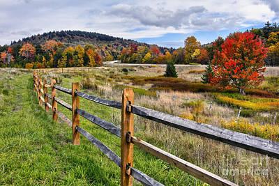 Autumn Fall Colors Tree In West Virginia Meadow I Art Print by Dan Carmichael