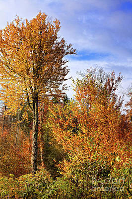 Photograph - Autumn Fall Colors - Yellow Trees Blue Sky by Dan Carmichael
