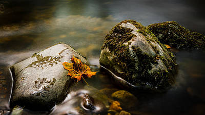 Photograph - Autumn Fall by Kelvin Trundle