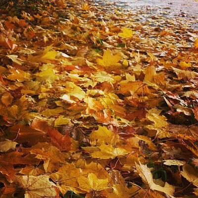 Photograph - Autumn Fall Leaves by Tamara Sushko