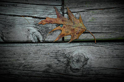 Photograph - Autumn Fallen Brown Oak Leaf by Randall Nyhof