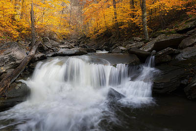 Autumn Falling Print by Bill Wakeley