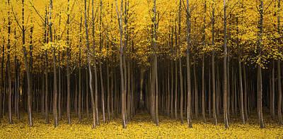 Photograph - Autumn Fantasy by Bjorn Burton