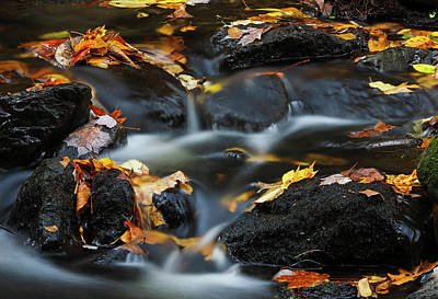 Photograph - Autumn Farewell by Juergen Roth