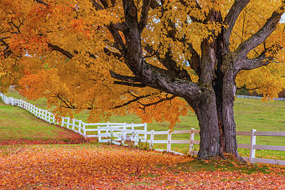 Photograph - Autumn Farm Tree by Chris Whiton