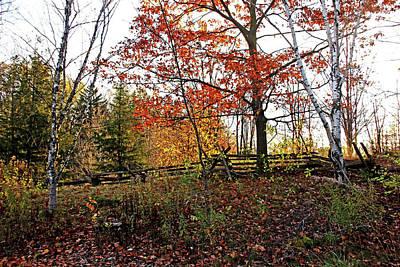 Photograph - Autumn Fenceline by Debbie Oppermann