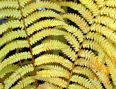 Autumn Ferns Art Print by Tony Ramos