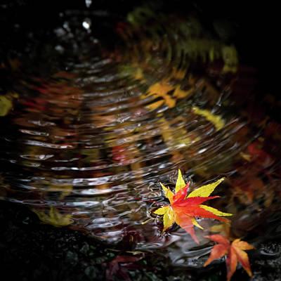 Japan Photograph - Autumn-filled Pot by Masa Onikata