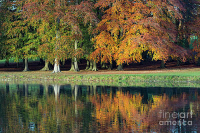 Photograph - Autumn Finale  by Tim Gainey