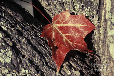 Photograph - Autumn Find by Aimelle