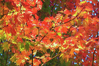 Photograph - Autumn Fire by Bonnie Follett