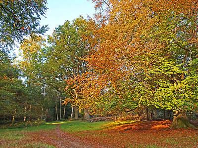 Photograph - Autumn Fire by Gill Billington