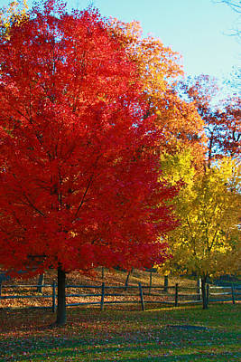 Photograph - Autumn Fire  In  Red  And  Gold by Allen Beatty
