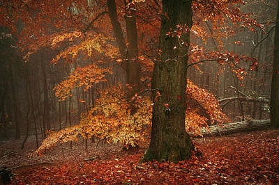Photograph - Autumn Fire by Jenny Rainbow