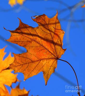 Photograph - Autumn Flair by France Laliberte