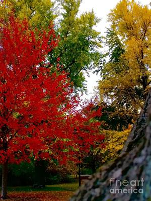Man Cave - Autumn - Flame by Mioara Andritoiu