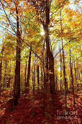 North Conway Photograph - Autumn Flare by Catherine Reusch Daley
