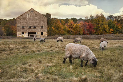 Photograph - Autumn Fleece by Robin-Lee Vieira