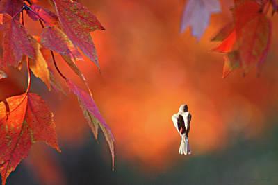 Photograph - Autumn Flight by Steve Karol