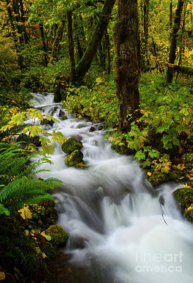Photograph - Autumn Floodwaters by Mike Dawson