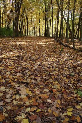 Photograph - Autumn Floor by Dylan Punke