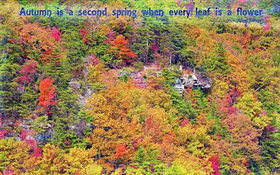 Photograph - Autumn Flowering by John M Bailey