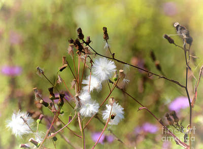 Photograph - Autumn Flowers by Kerri Farley
