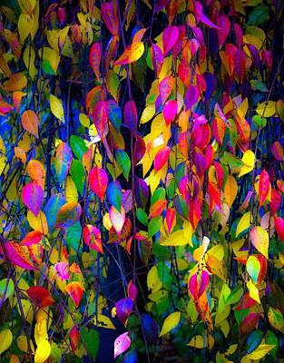 Photograph - Autumn Flre by Gerry Tetz