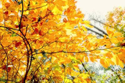 Autumn Flutter Art Print by John Mueller