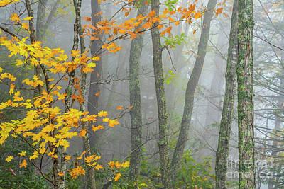 Autumn Fog Gauley River Nra Art Print