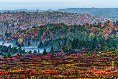 Photograph - Autumn Fog In Dolly Sods by Thomas R Fletcher