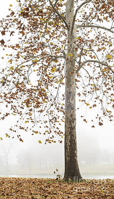 Photograph - Autumn Fog by Tamara Becker