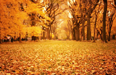 Elm Photograph - Autumn Foliage - Central Park - New York City by Vivienne Gucwa