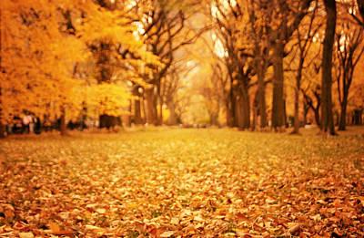 Autumn Foliage - Central Park - New York City Print by Vivienne Gucwa