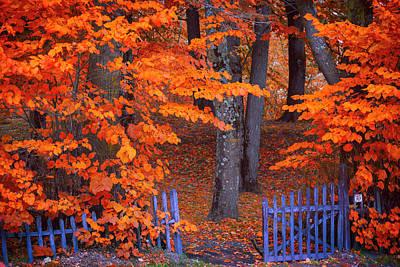 Photograph - Autumn Foliage by Giovanni Allievi