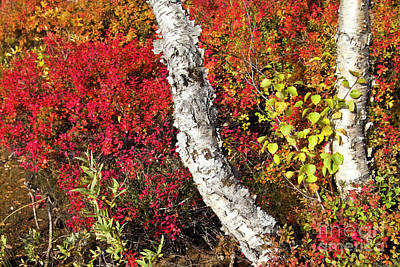 Red Photograph - Autumn Foliage In Finland by Heiko Koehrer-Wagner