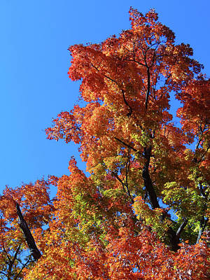 Photograph - Autumn Foliage by Jamie Johnson