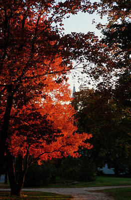 Photograph - Autumn Foliage  by John Clark