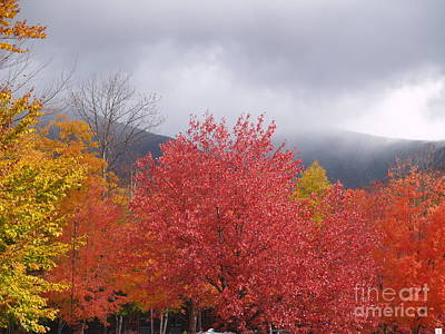 Photograph - Autumn Foliage L by Paul Galante