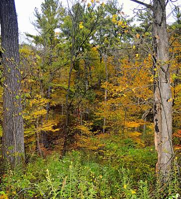 Photograph - Autumn Forest by Bonfire Photography