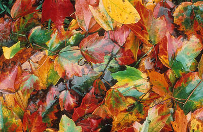 Photograph - Autumn Forest Floor by Gerard Fritz