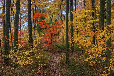 Photograph - Autumn Forest Hike by Ulrich Burkhalter