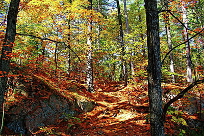 Photograph - Autumn Forest Killarney by Debbie Oppermann