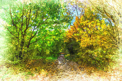 Photograph - Autumn Forest Path Art by David Pyatt